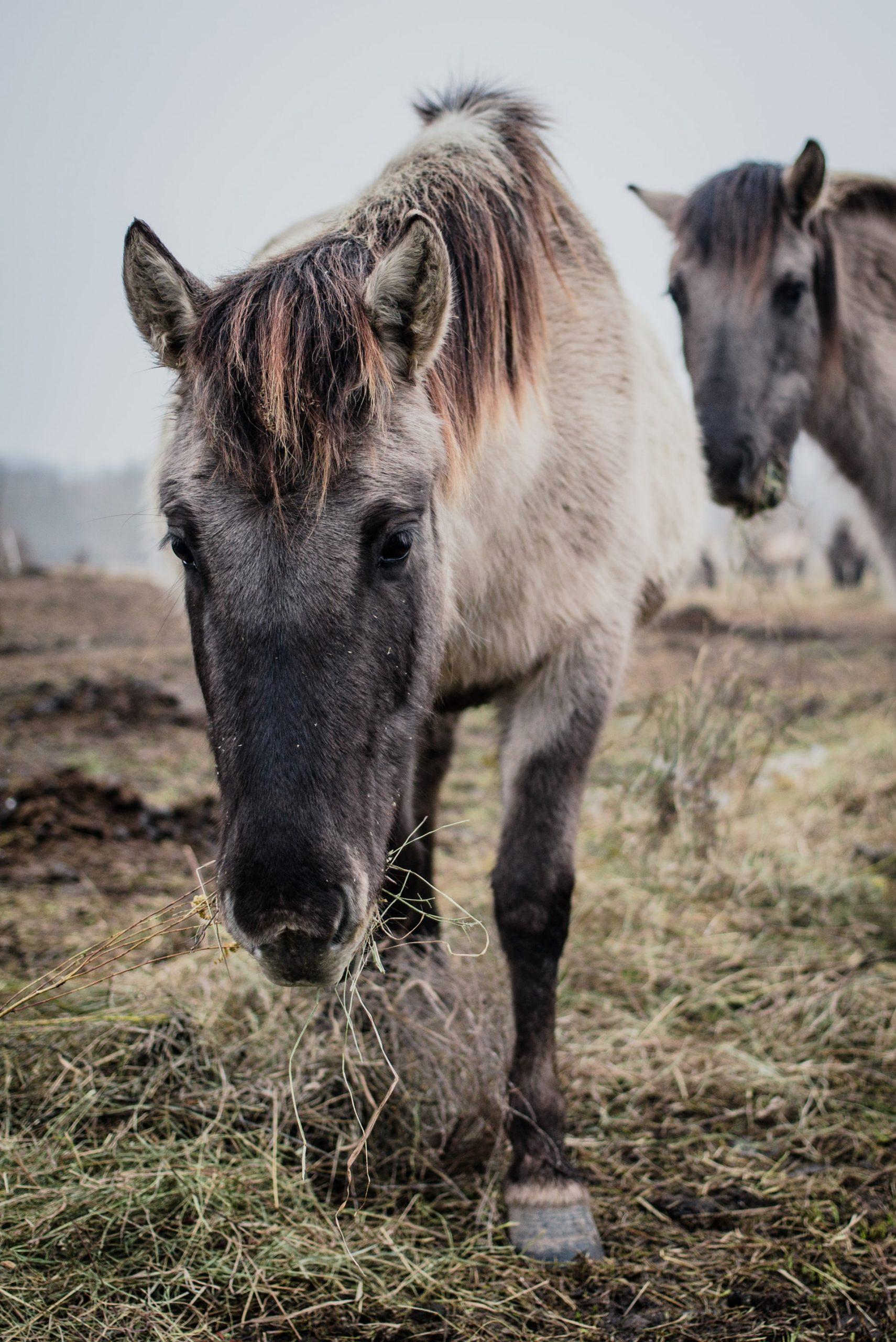 Korrekt fodring af din hest er vigtigt for den daglige trivsel